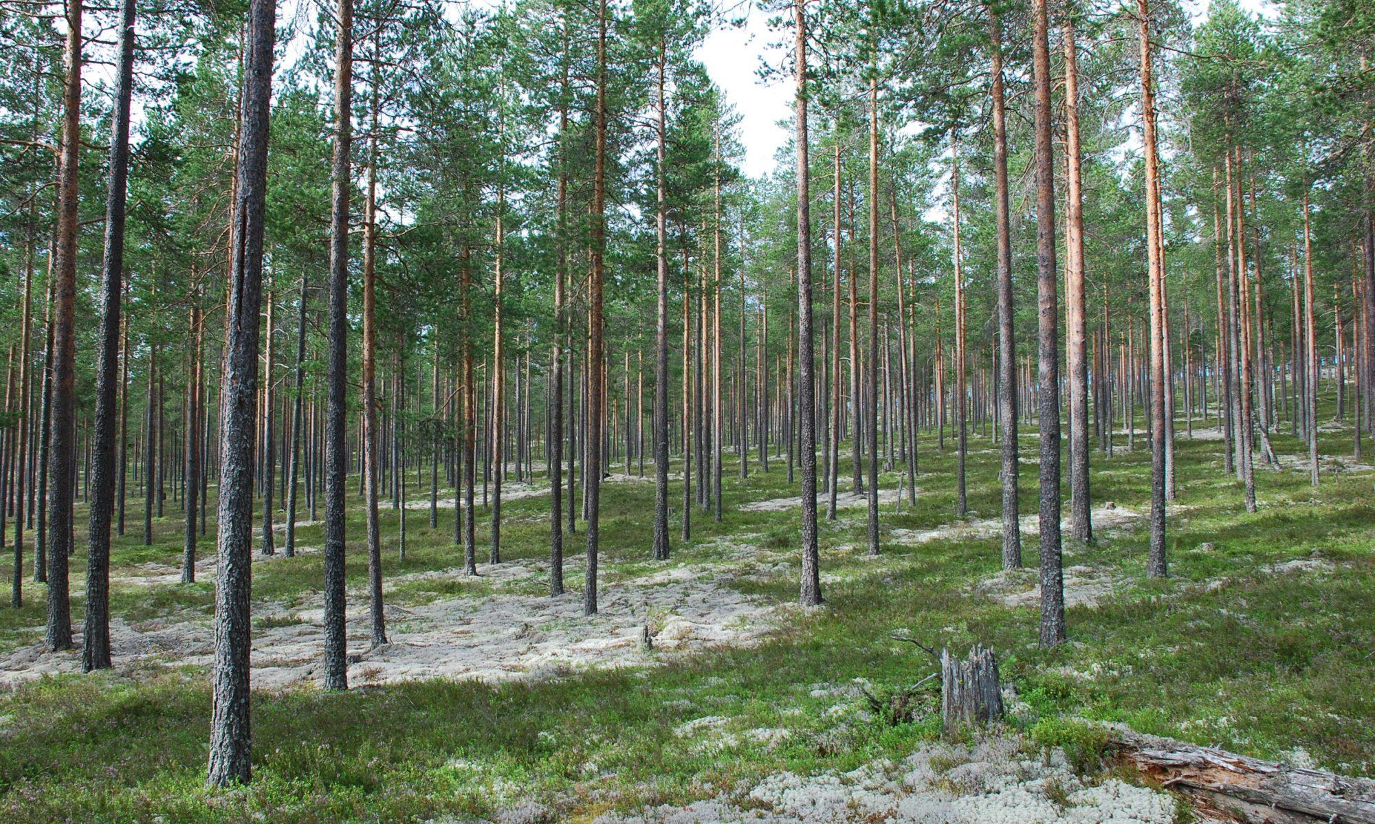 Schweden Blog